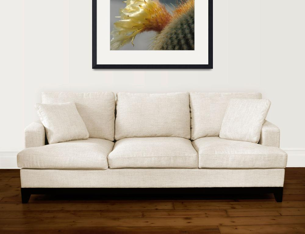 """""""Golden Cactus Flower&quot  (2011) by JKHaasePhotography"""