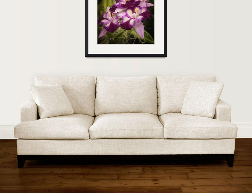 """""""RUFFLED ORCHIDS""""  (2014) by shaynaphotography"""