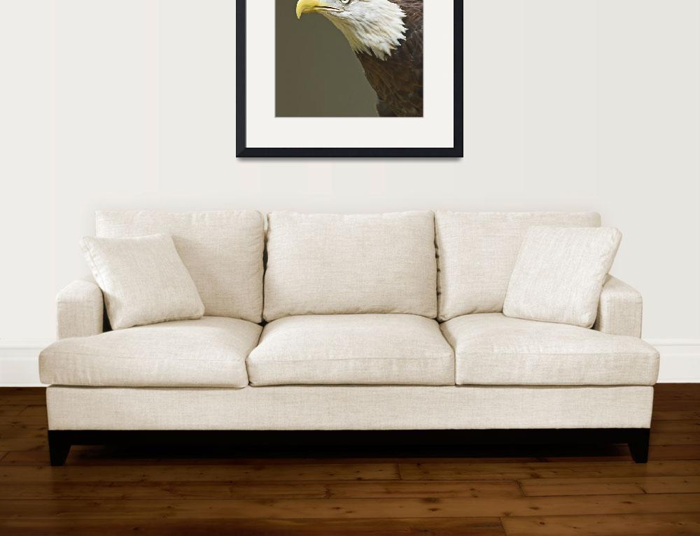 """Bald Eagle""  (2007) by tricia"