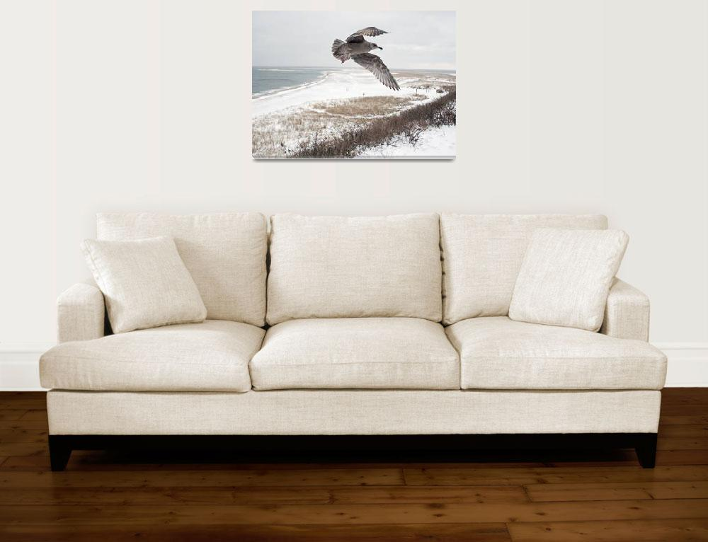 """""""Seagull at Chatham Light Bluff&quot  (2016) by ChrisSeufert"""