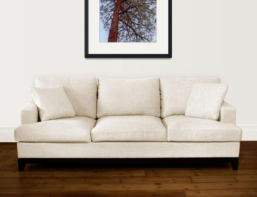 """Pine with Red Trunk""  (2010) by SherylKaras"