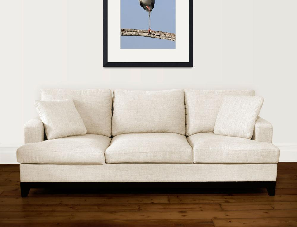 """Wood Stork Photograph""  by ArtLoversOnline"