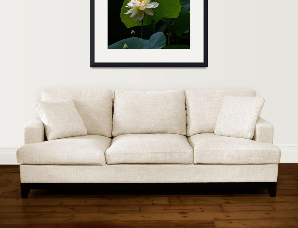 """Lotus Pond Loveliness --square frame&quot  (2013) by LightHeart"