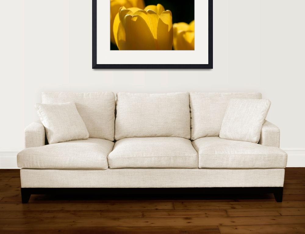 """Yellow Tulips with Black Background""  (2016) by KsWorldArt"