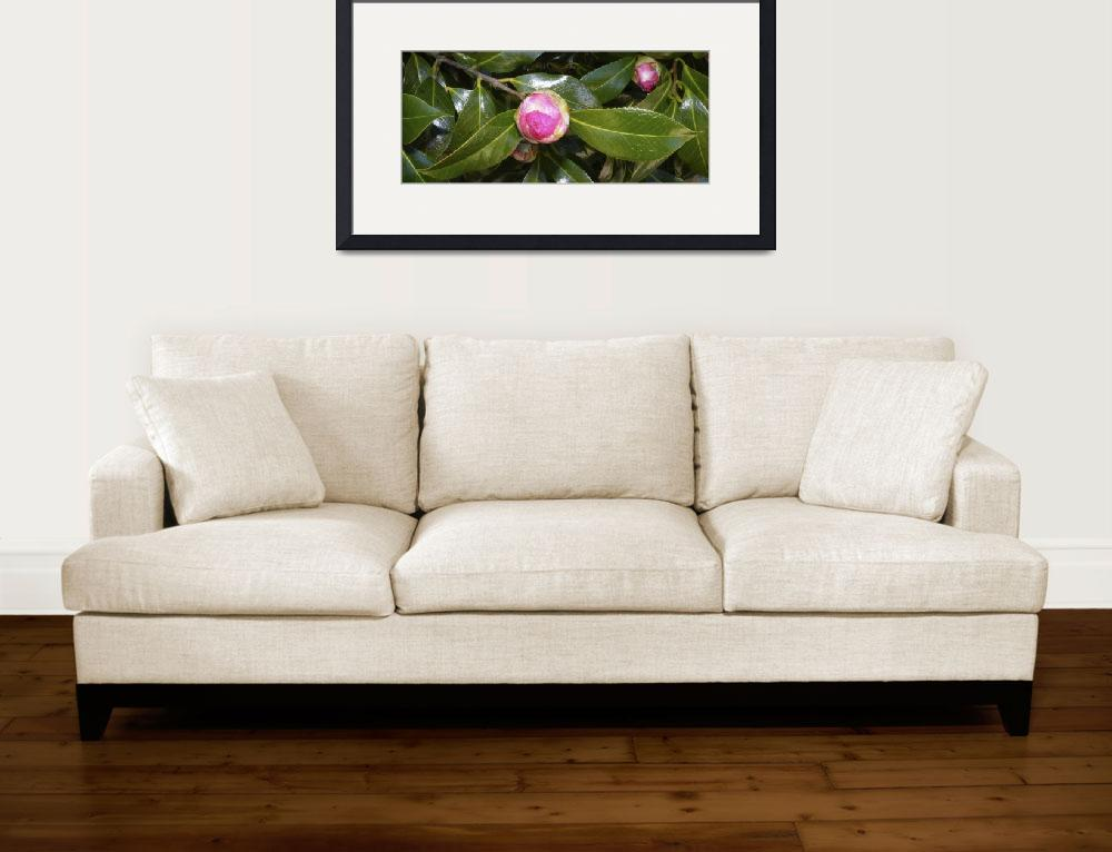 """""""Camellia Bud 2&quot  (2009) by Kimmary"""