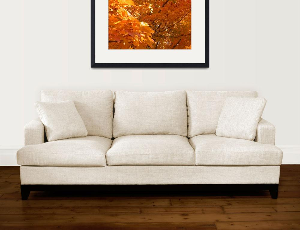 """""""Sunlit Leaves in Fall&quot  (2009) by LaBoure"""
