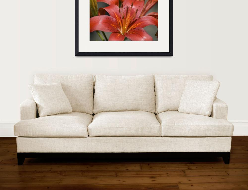 """""""Tiger Lilly&quot  (2008) by AdriftArtWorks"""