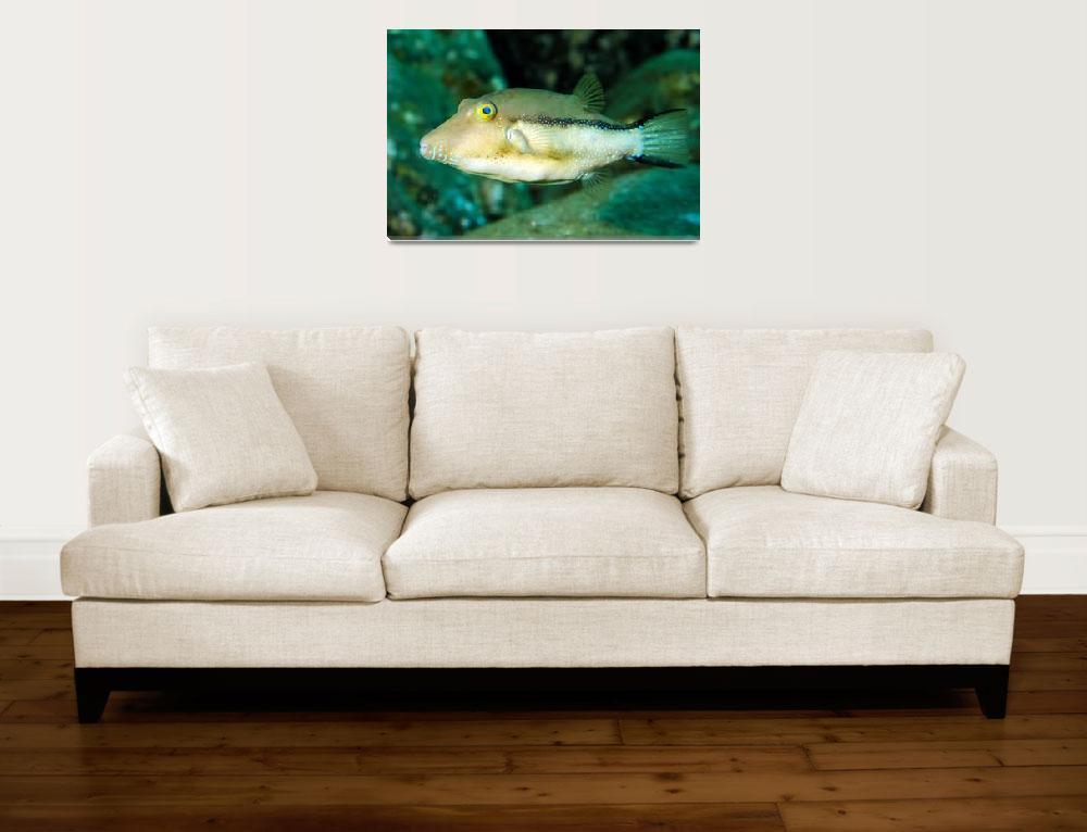 """Atlantic Pufferfish""  (2008) by JoaoPonces"