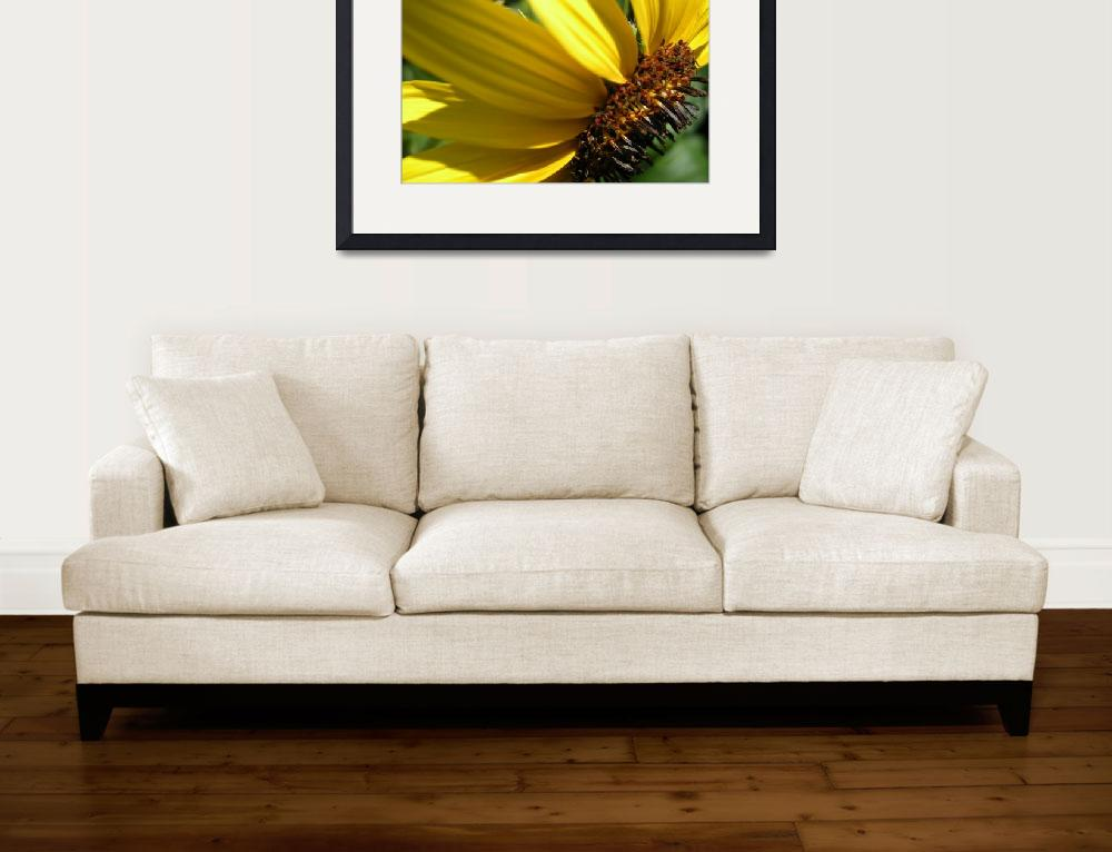 """""""Sunflower&quot  (2008) by Peay4Pics"""