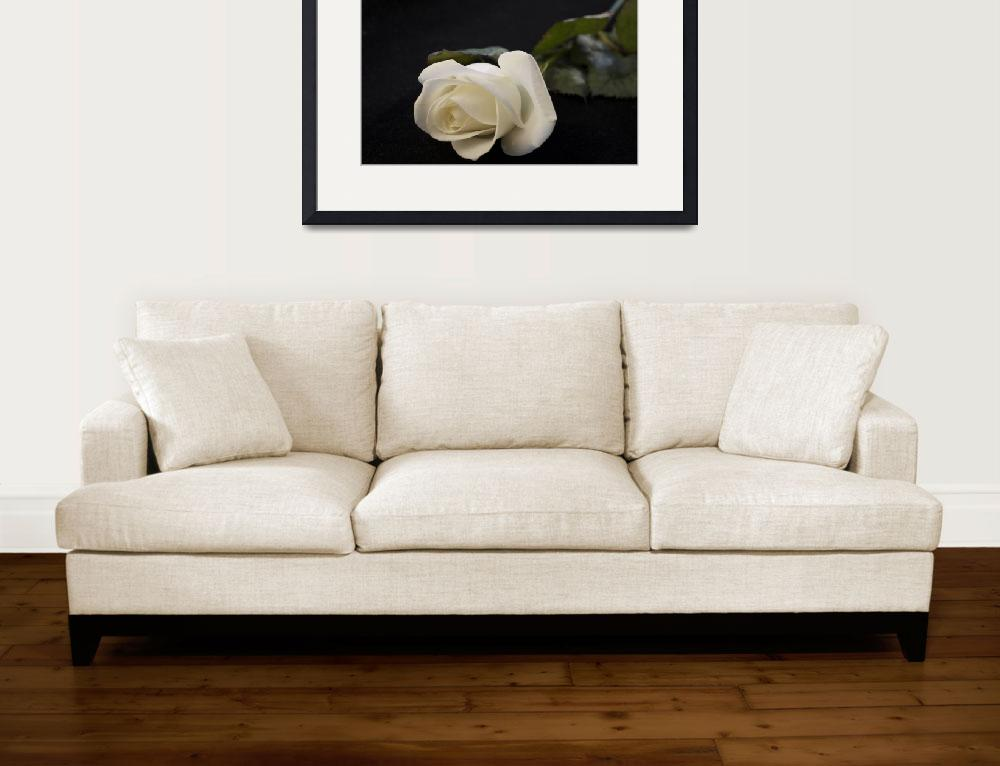 """""""Ivory Rose&quot  (2008) by Blondeambition"""