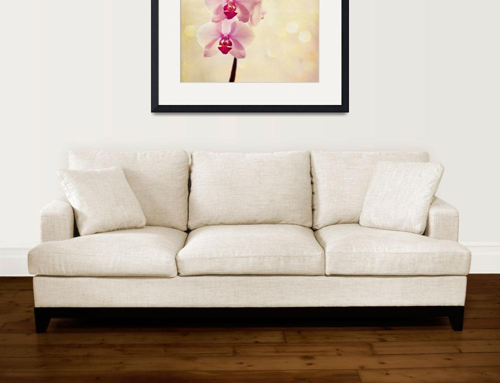 """""""Orchids&quot  (2012) by sweetblue"""