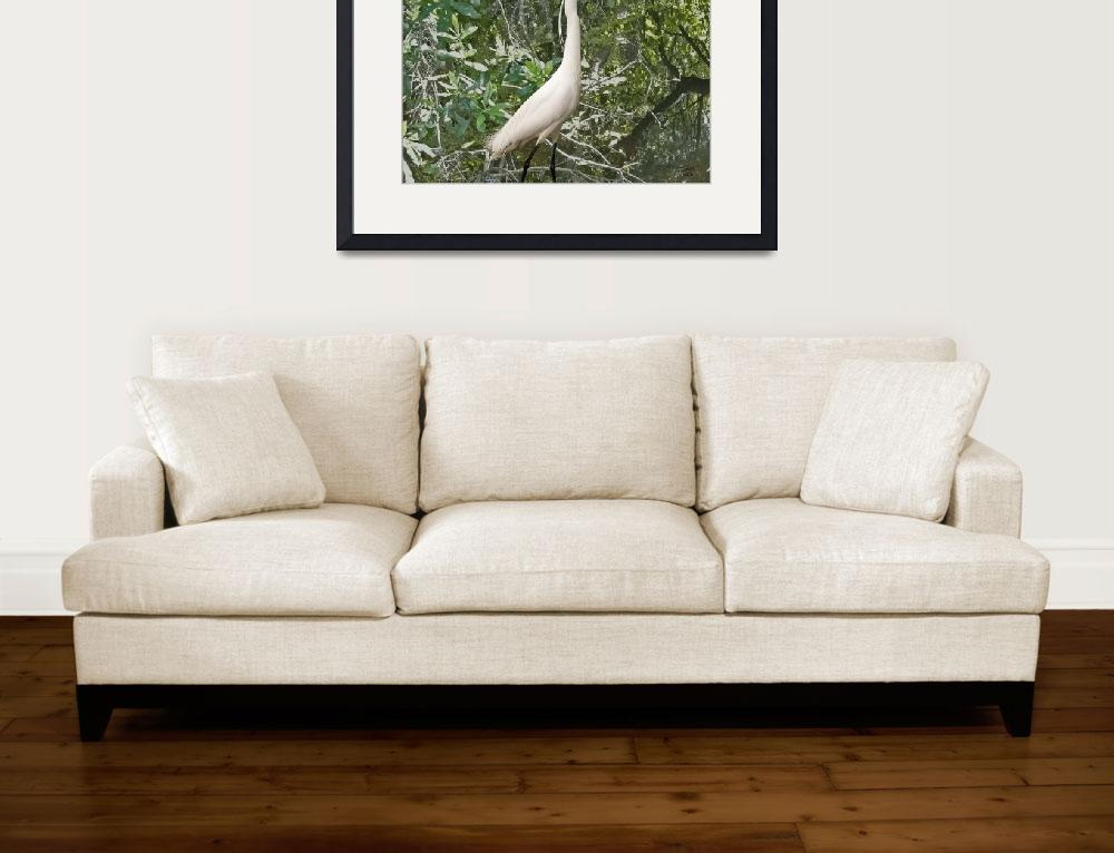 """""""Egret in Mangroves&quot  (2010) by spadecaller"""