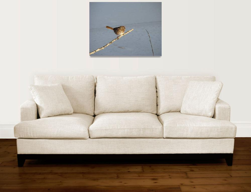 """Winter bird""  (2008) by Albertphoto"