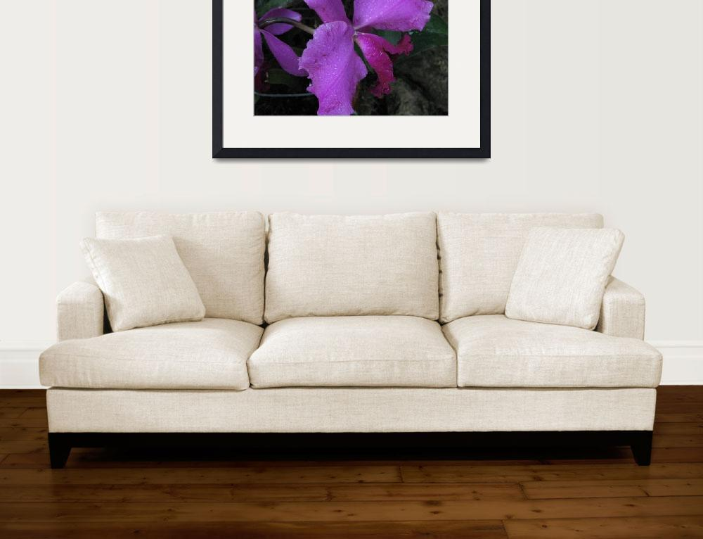 """""""Orchid""""  (2010) by patriciaschnepf"""