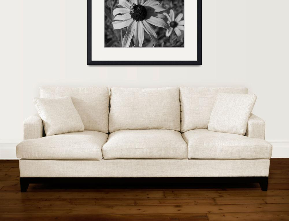 """""""Daisies in Black & White&quot  by wendymarie71"""