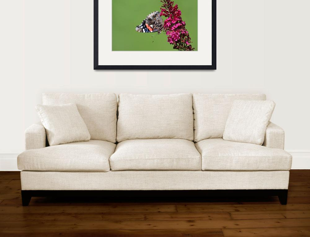 """""""Red Admiral Butterfly Upside Down 2015""""  (2015) by KsWorldArt"""