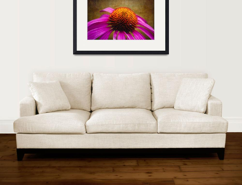 """""""Purple Coneflower on Canvas""""  (2012) by George_Oze"""