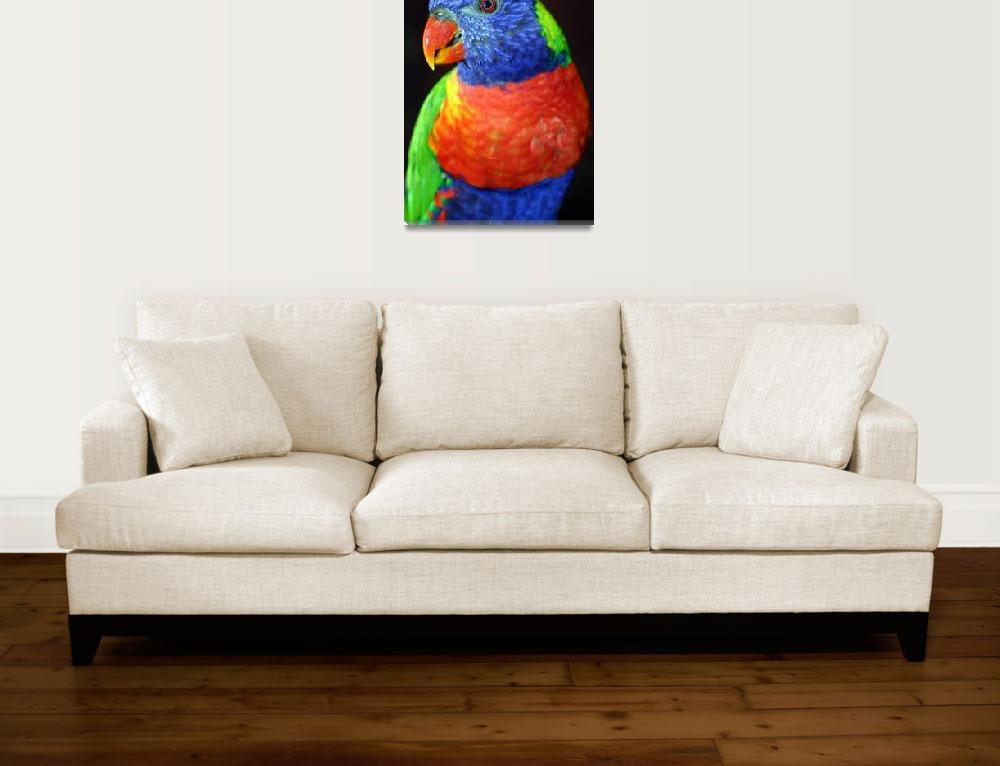 """""""Lorikeet&quot  by SolacePointe"""