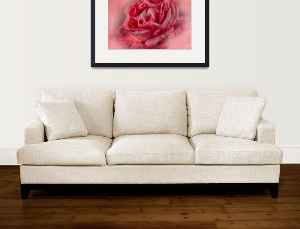 """""""Pink Rose&quot  by Annela"""