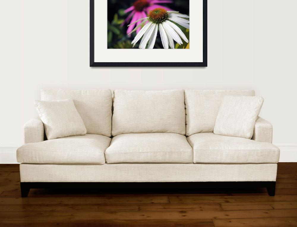 """""""White Coneflower&quot  (2013) by athompson"""