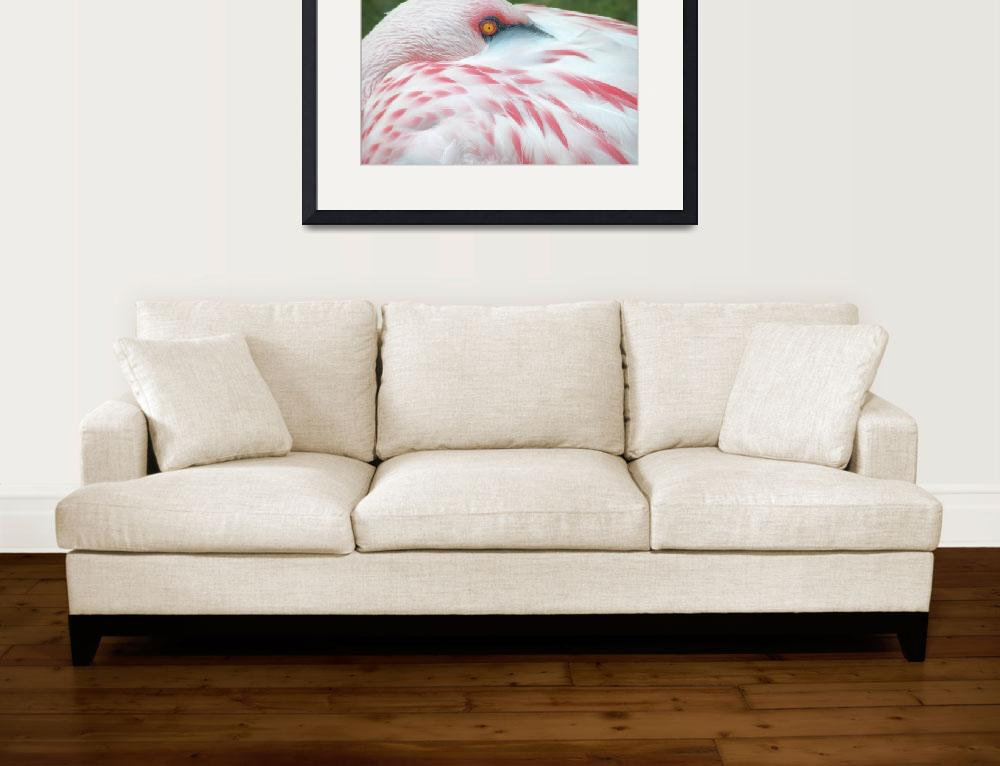 """Flamingo at Rest&quot  (2009) by shelshots"