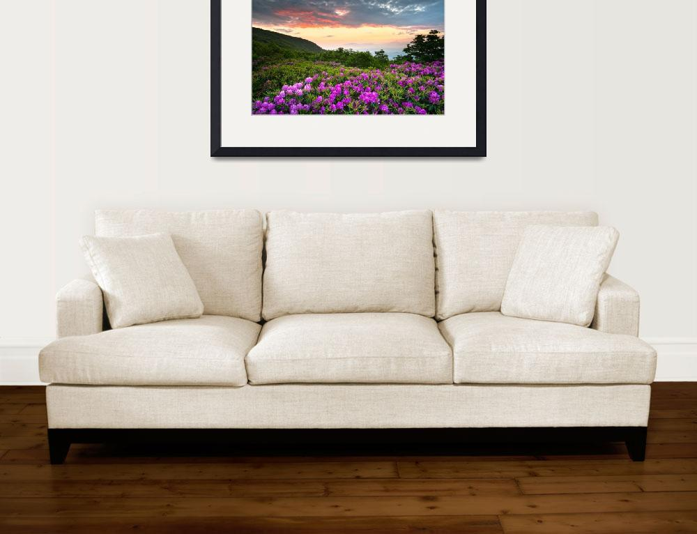 """""""Craggy Gardens Bloom - Rhododendron at Sunset&quot  (2011) by DAPhoto"""