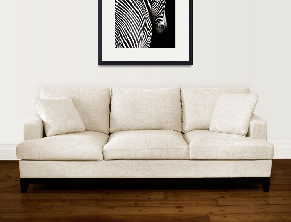 """""""Black and White Zebra with Black Background&quot  (2009) by walbyent"""