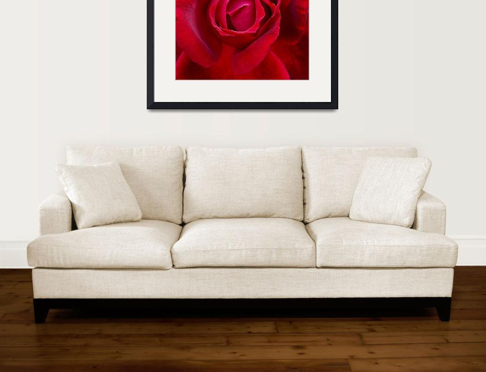 """""""Red Roses and Beauty&quot  (2006) by garlanddunston"""