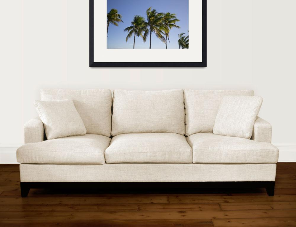 """""""Palms in the breeze""""  by onemahon"""