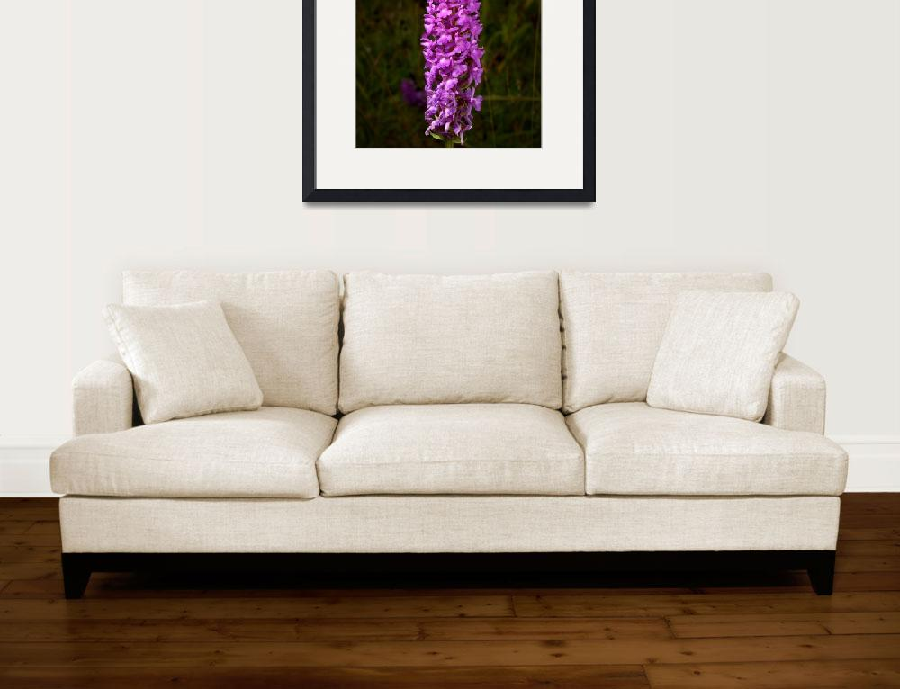 """""""Fragrant Orchid&quot  (2009) by roger"""