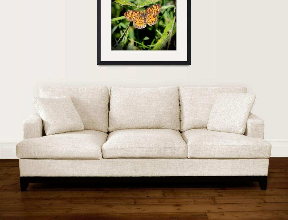 """""""Pearl Crescent Butterfly 2016&quot  (2016) by KsWorldArt"""