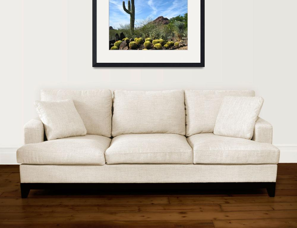 """""""Cacti Desert""""  (2010) by mather_boehm_images"""