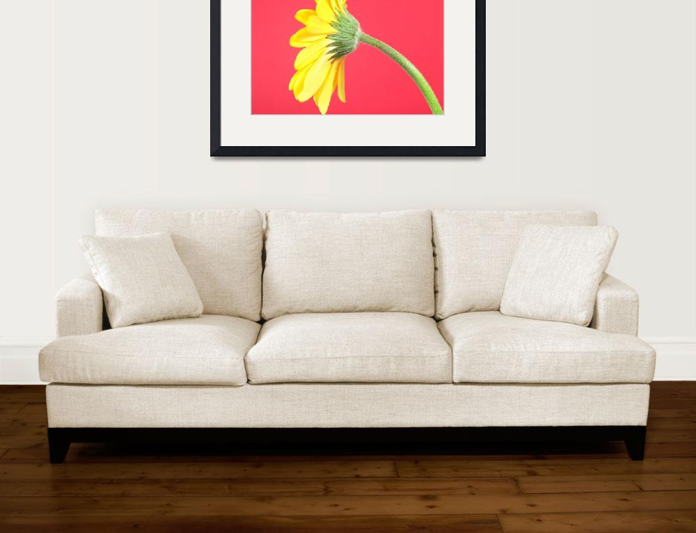 """Yellow Gerbera Daisy Solitary""  (2006) by Infomages"