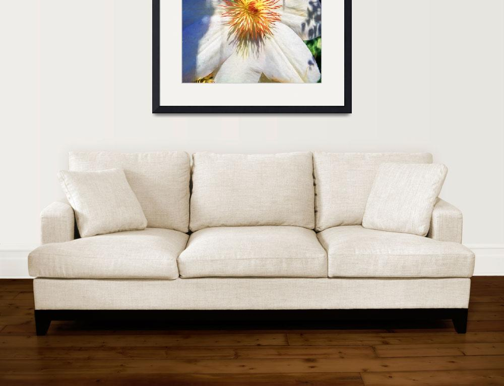 """""""White Clematis Flower&quot  (2016) by johncorney"""