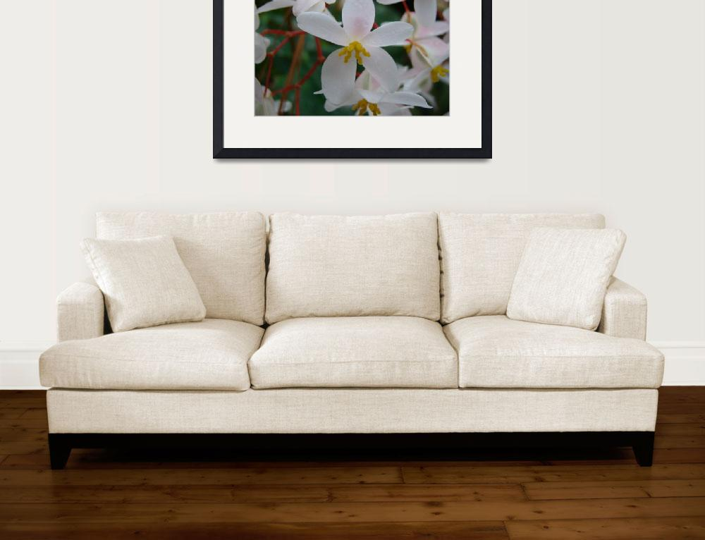 """""""White Flowers&quot  (2009) by alymariephotography"""