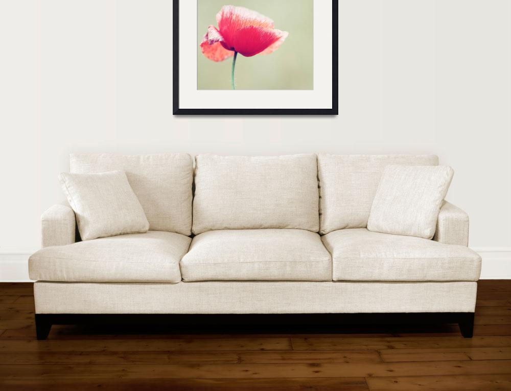 """""""Vintage Poppy&quot  (2012) by SYoungPhotography"""