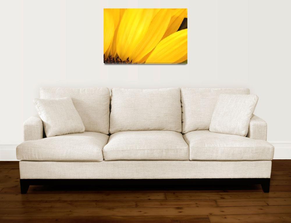 """Sunflower Petals""  (2003) by MichaelSwanson"