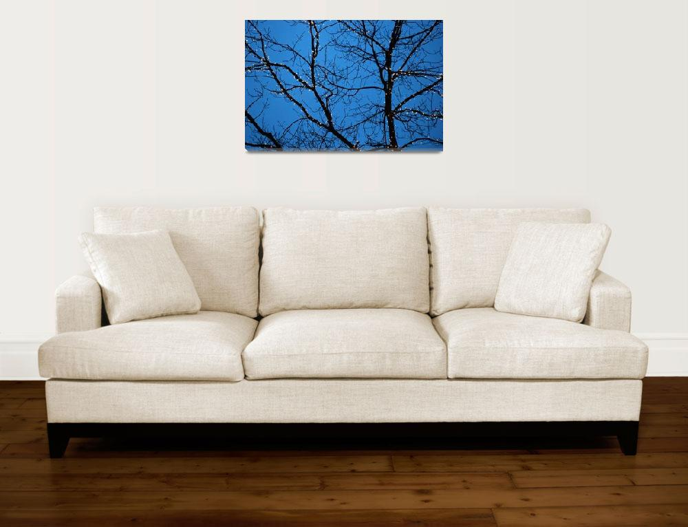 """""""Tree Silhouette with Blue Sky&quot  (2005) by BobFikePhoto"""
