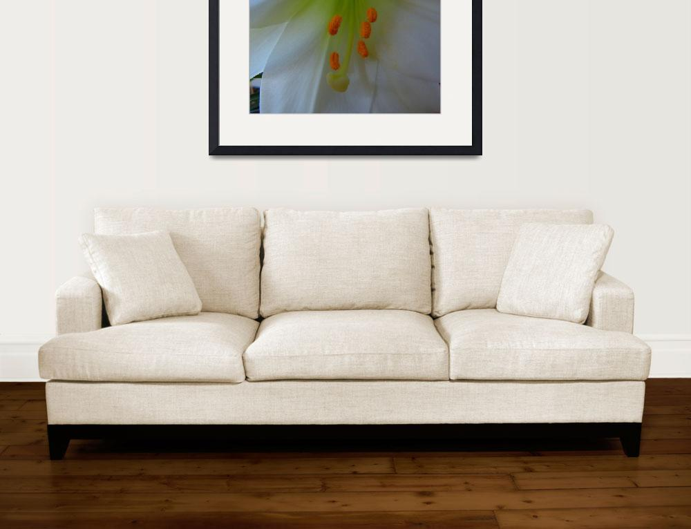 """""""White Easter Lily""""  (2013) by dasiygirl"""