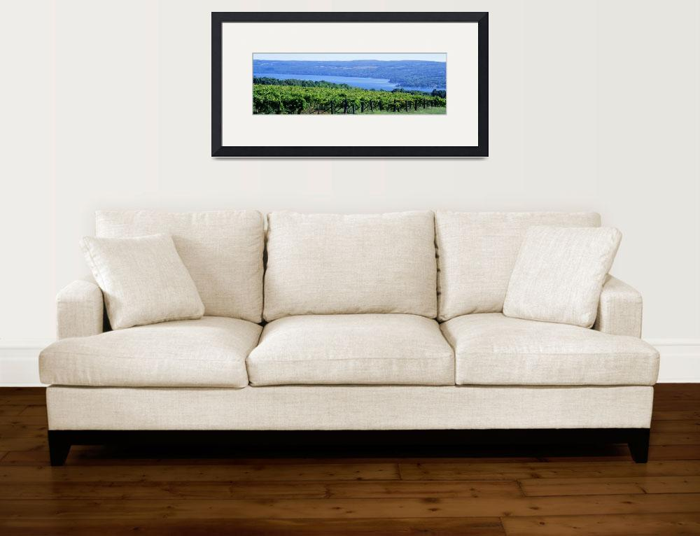 """""""Vineyard Finger Lakes Region NY&quot  by Panoramic_Images"""