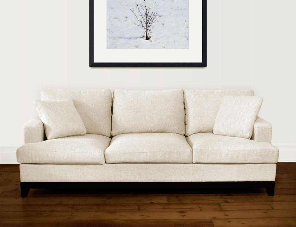"""dogwood in snow""  (2010) by imagineit"