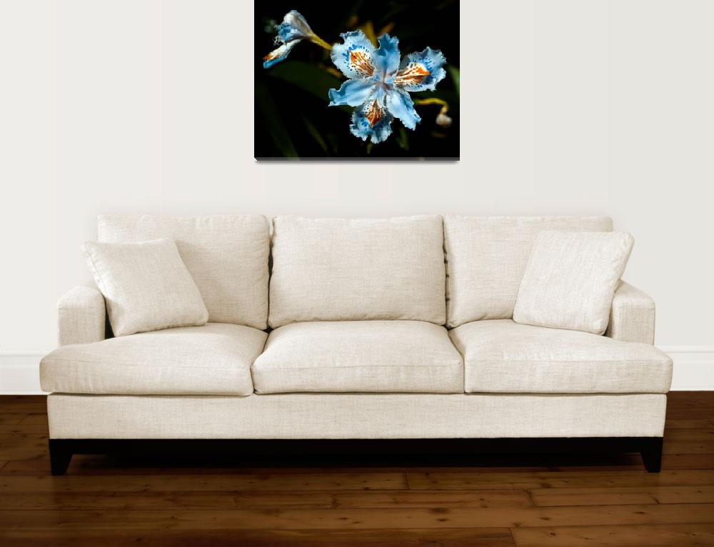 """""""Beautiful Lily&quot  (2012) by davidbricher"""