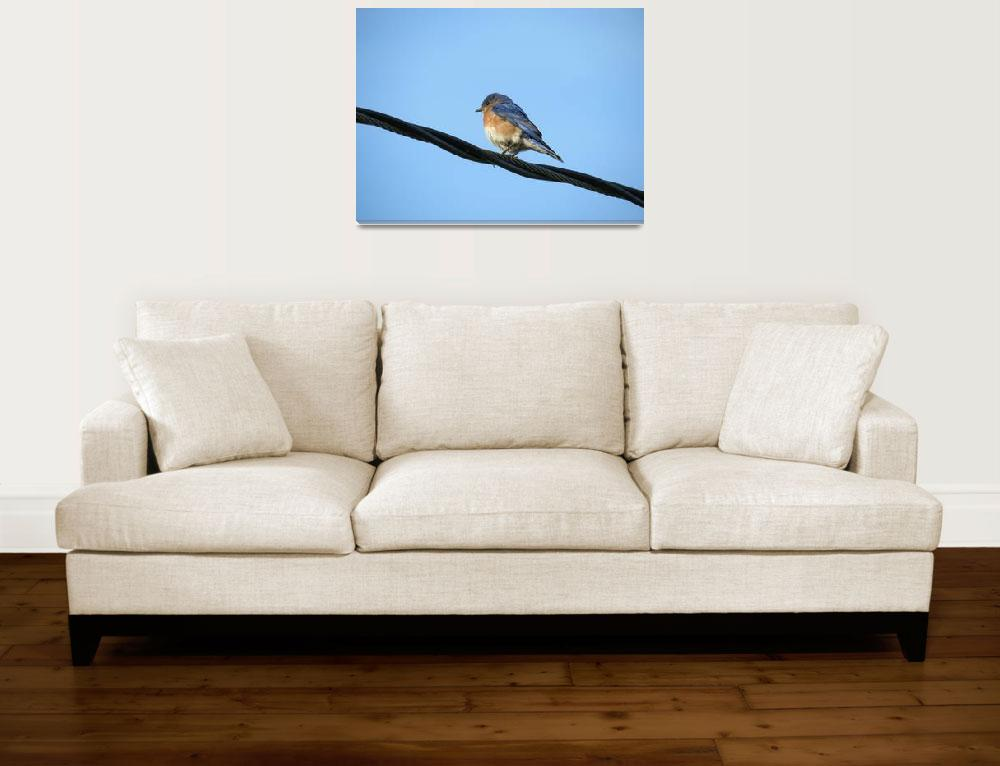 """""""Bird on a wire""""  by ESNielsen"""