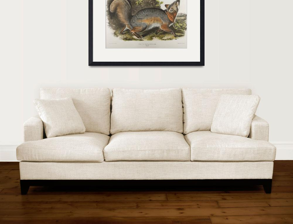 """""""Vintage Illustration of a Grey Fox (1843)&quot  by Alleycatshirts"""