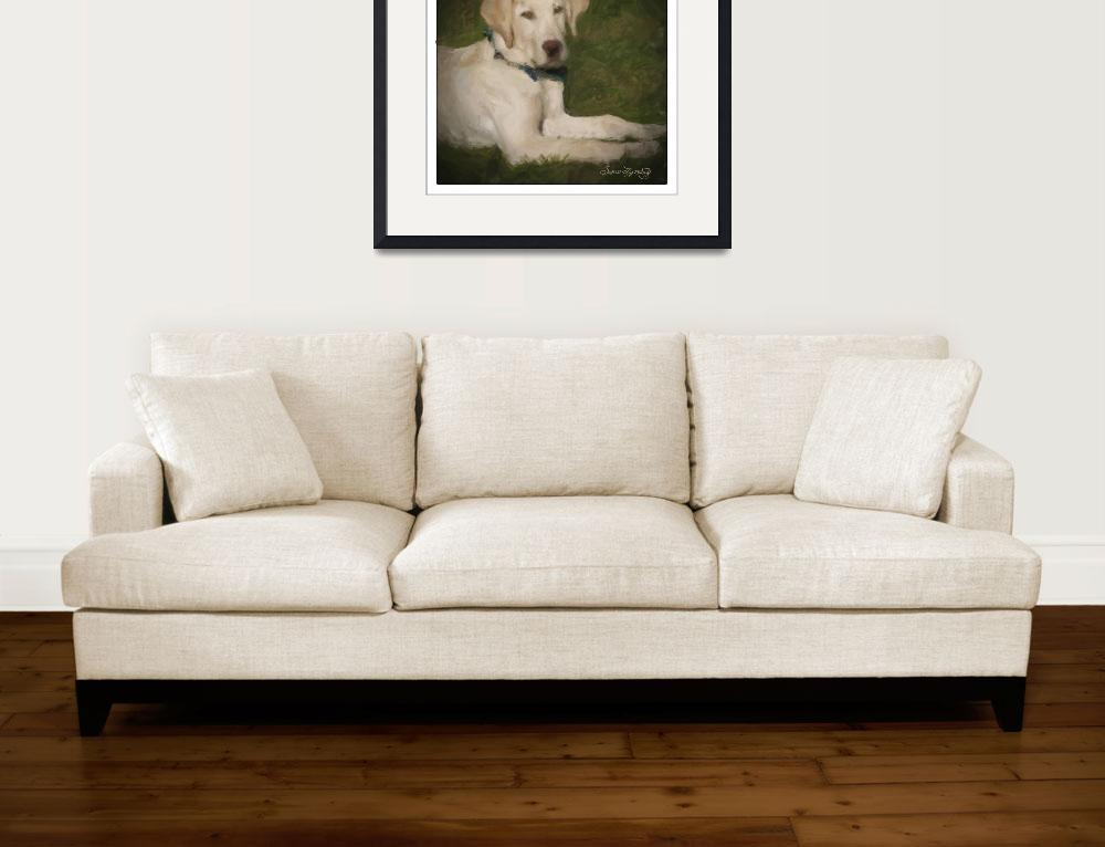 """""""YELLOW LAB PUPPY&quot  (2012) by shaynaphotography"""