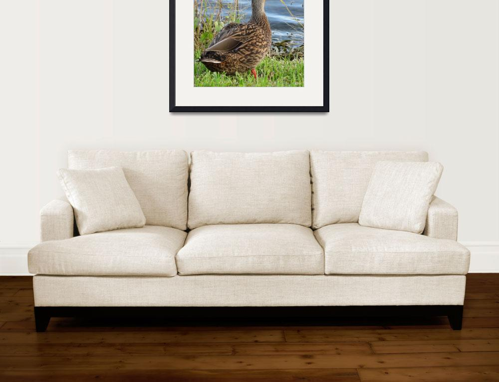 """""""Mottled Duck 2""""  (2018) by natureviews"""