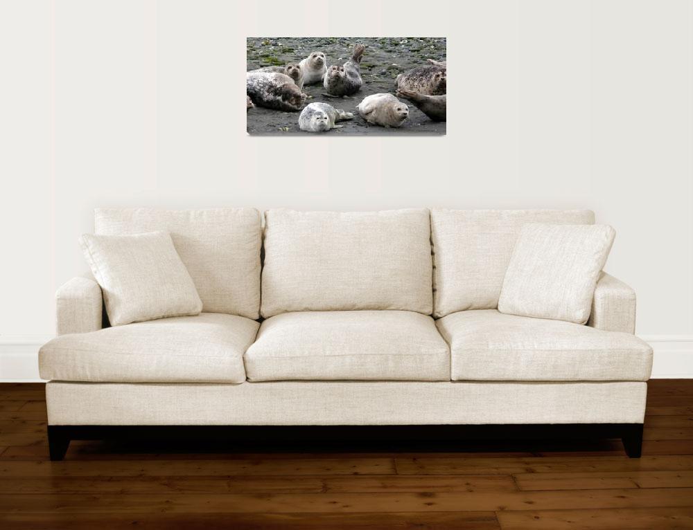 """Harbor Seals, Gold Beach, Oregon""  by karinm"