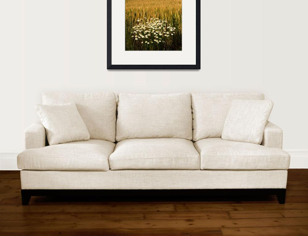 """""""Field and Chamomile&quot  (2016) by MilanMKM"""
