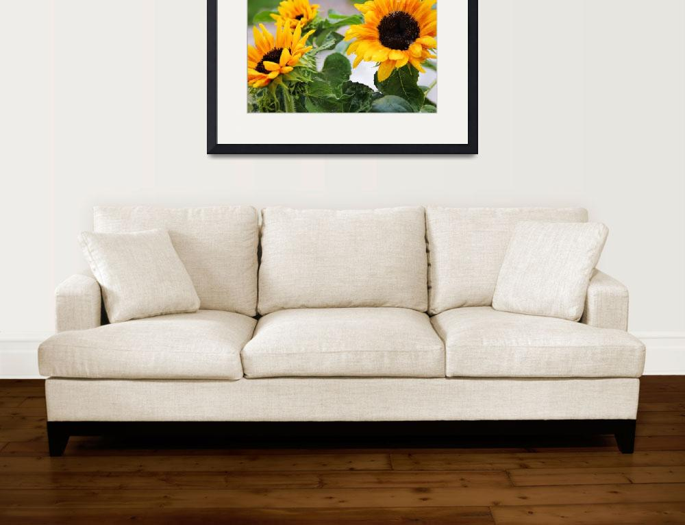 """""""Sunflowers and Waterdrops""""  (2014) by patsphotos"""