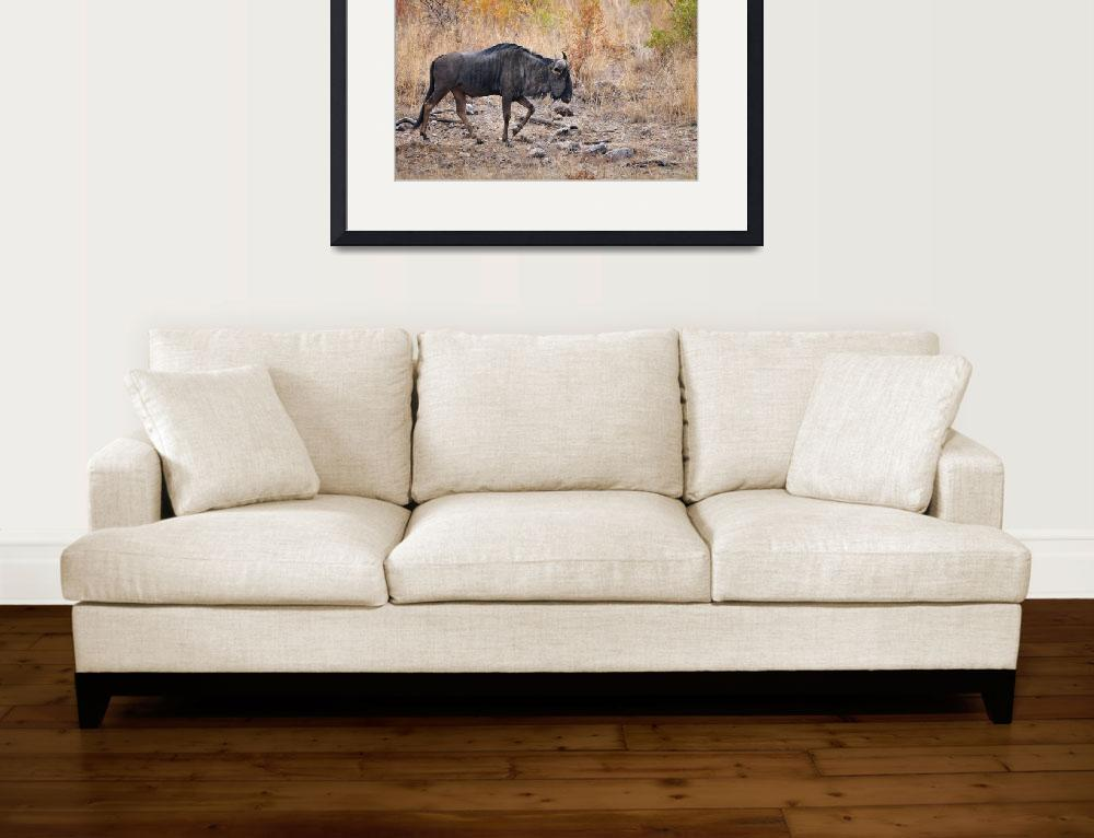 """""""WCC_1296- Blue Wildebeest&quot  (2015) by photocell"""